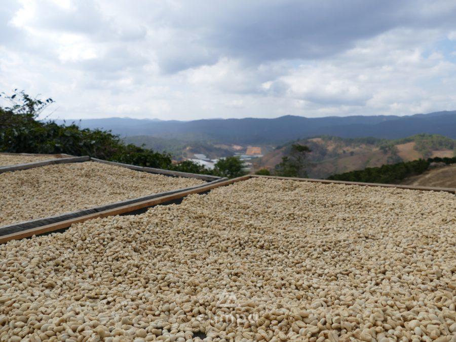 Coffeeorigins während Corona kennenlernen: Teil 4 Da Lat Vorschaubild