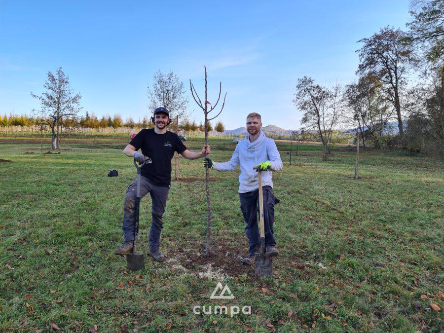 cumpa pflanzt wieder Bäume für die CO2 Kompensation Vorschaubild